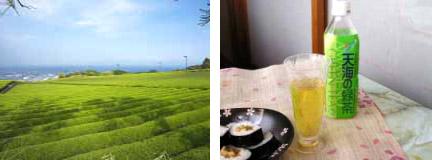 美味しい深層水の緑茶